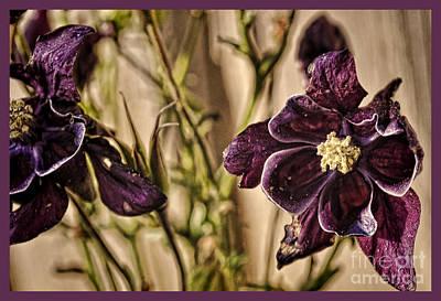 Susan Jones Photograph - Spring Columbine by Susan Jones