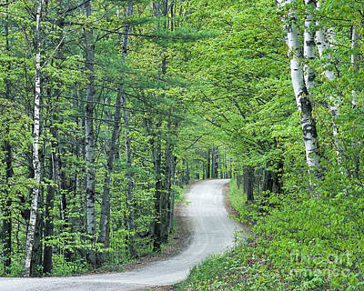 Photograph - Spring Country Road by Alan L Graham