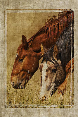 Photograph - Spring Creek Basin Wild Horses by Priscilla Burgers