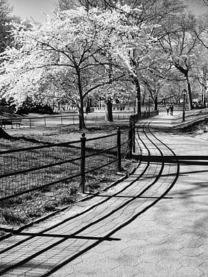 Photograph - Spring Curves by Cornelis Verwaal