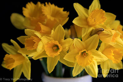 Spring Daffodils Art Print by Tracy  Hall