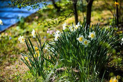 Dreamy Pink Park Scene Photograph - Spring Daffodils.park Keukenhof by Jenny Rainbow