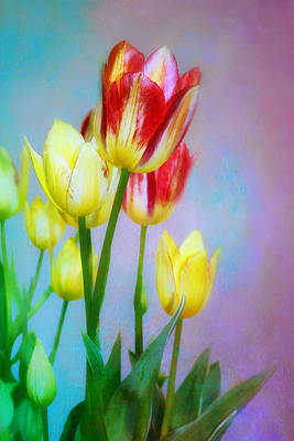 Photograph - Spring Dance - Tulips  by Nikolyn McDonald
