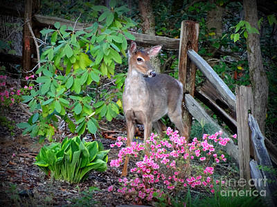 Photograph - Spring Deer by Crystal Joy Photography