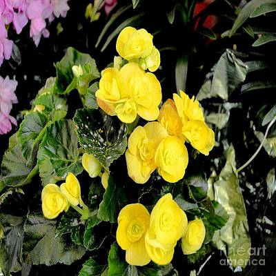 Art Print featuring the photograph Spring Delight In Yellow by Luther Fine Art