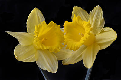 Spring Double Act. Original by Terence Davis