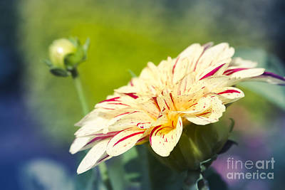 Photograph - Spring Dream Jewel Tones by Sharon Mau