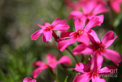Pink Photograph - Spring Dream  by Neal Eslinger