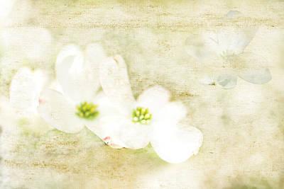 Spring Dreams Art Print