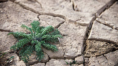 Photograph - Breaking Of The Drought by Mary Lee Dereske