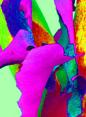 Photograph - Spring Eucalypt Abstract 15 by Margaret Saheed