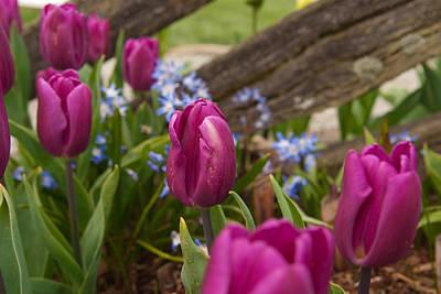 Photograph - Spring Fence by Erin Kohlenberg