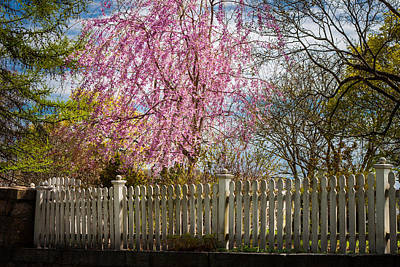 Photograph - Spring Fence by Kirkodd Photography Of New England