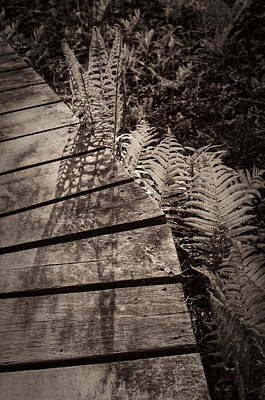Photograph - Spring Ferns Beside The Limehouse Boardwalk by Alan Norsworthy