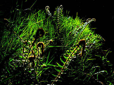 Photograph - Spring Ferns by Steve Battle