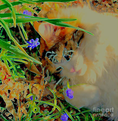 Photograph - Spring Fever by Diane montana Jansson