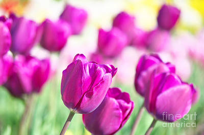Flowers Photograph - Spring Fever II by Angela Doelling AD DESIGN Photo and PhotoArt