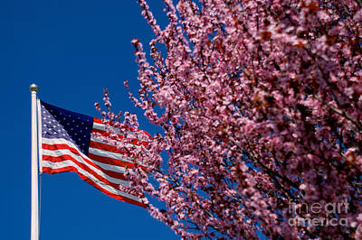 Photograph - Spring Flag by Mark Dodd