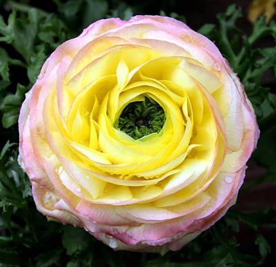 Photograph - Spring Flower 3 by Bob Slitzan