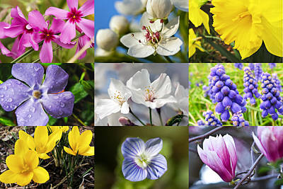 Photograph - Spring Flower Collage by Melinda Fawver