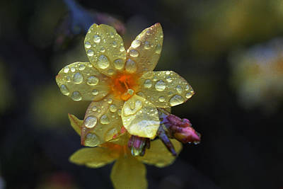 Photograph - Spring Flower by Dragan Kudjerski
