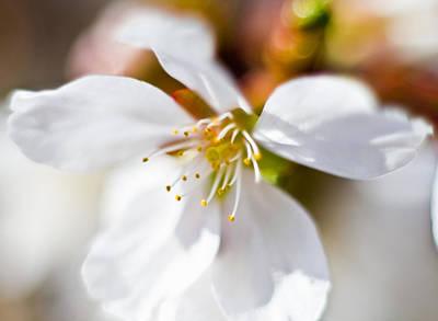 Parkersburg Wv Photograph - Spring Flower by Jonny D