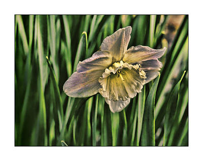 Photograph - Spring Flower by Ron Roberts