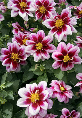 Photograph - Spring Flowers 4 by Bob Slitzan