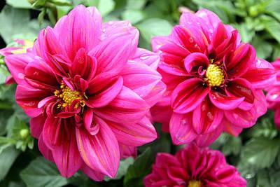 Photograph - Spring Flowers 6 by Bob Slitzan