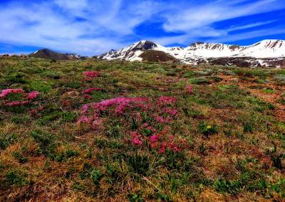 Photograph - Spring Flowers And View From Independence Pass by Dan Sproul