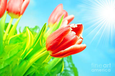 Colored Photograph - Spring Flowers Background by Michal Bednarek