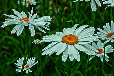 Photograph - Spring Flowers Bring May Showers by Rhonda Barrett