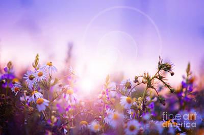 City Lights - Spring flowers field by Michal Bednarek