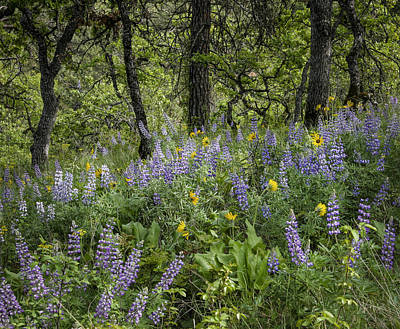 Photograph - Spring Flowers In The Columbia Gorge by Jean Noren
