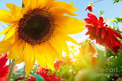 Katharine Hepburn - Spring flowers in the garden by Michal Bednarek