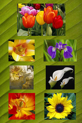 Photograph - Spring Flowers by Wes and Dotty Weber