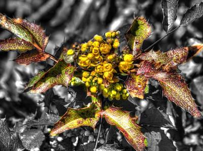 Hawk Photograph - Spring Flowers Yellow by John Straton