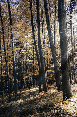 Art Print featuring the photograph Spring Forest by Bruno Santoro