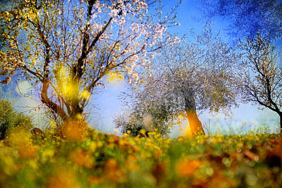 Abstracts Photograph - Spring Forest by Guido Montanes Castillo
