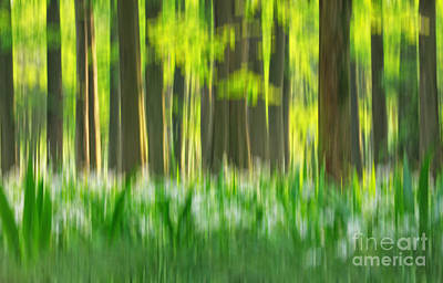 Photograph - Spring Forest Impression by Charline Xia