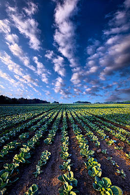 Cabbage Wall Art - Photograph - Spring Fresh by Phil Koch