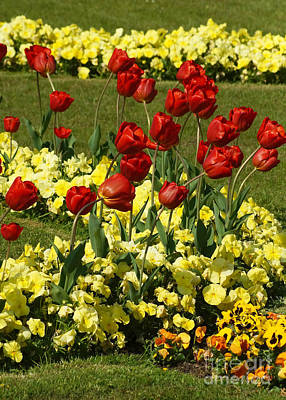 Photograph - Spring Garden 1 by Rudi Prott