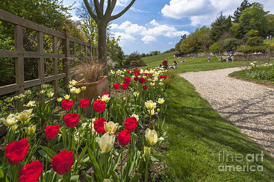D700 Photograph - Spring Garden by Donald Davis