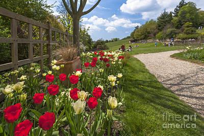 D700 Digital Art - Spring Garden by Donald Davis