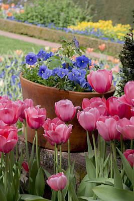 Photograph - Filoli Spring Garden by Patricia Dennis