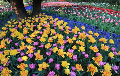 Photograph - Spring Garden Perspective by Carol Groenen