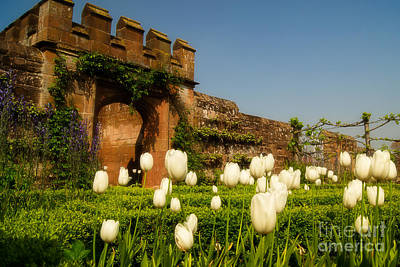 Kenilworth Castle Wall Art - Photograph - Spring Gardens At Kenilworth by Julie Clements