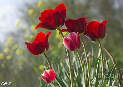 Photograph - Spring Glories by Wanda Krack