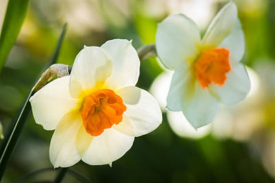 Photograph - Spring Glow by Bill Pevlor