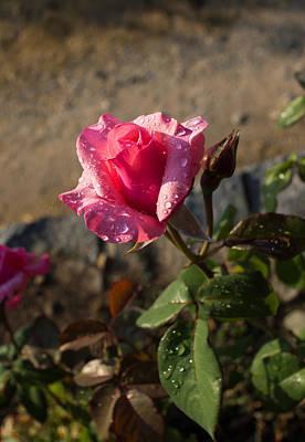Photograph - Spring Glow In Pink by Georgia Mizuleva